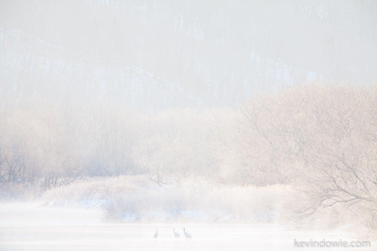 Cranes in the mist, Hokkaido, Japan