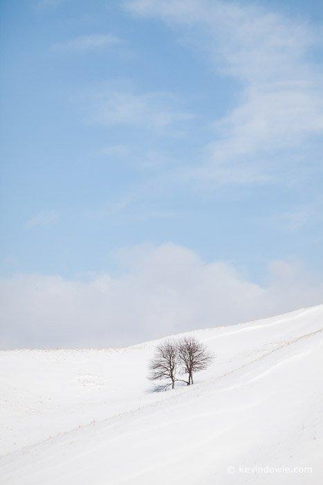 Trees in winter landscape, Hokkaido, colour version