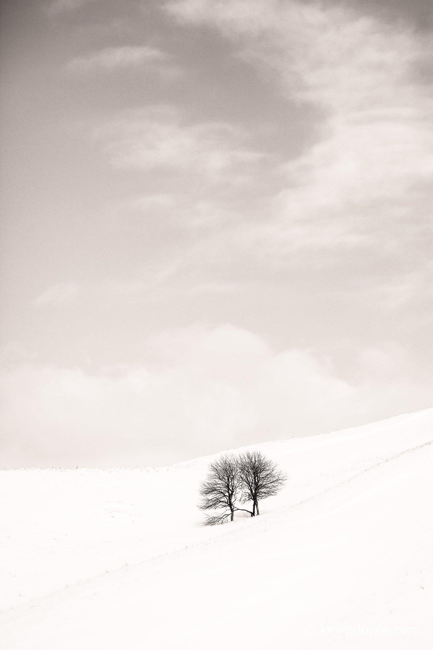 Trees in winter landscape, Hokkaido