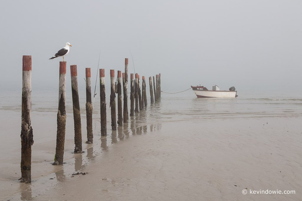 Seagull on post, South Africa.