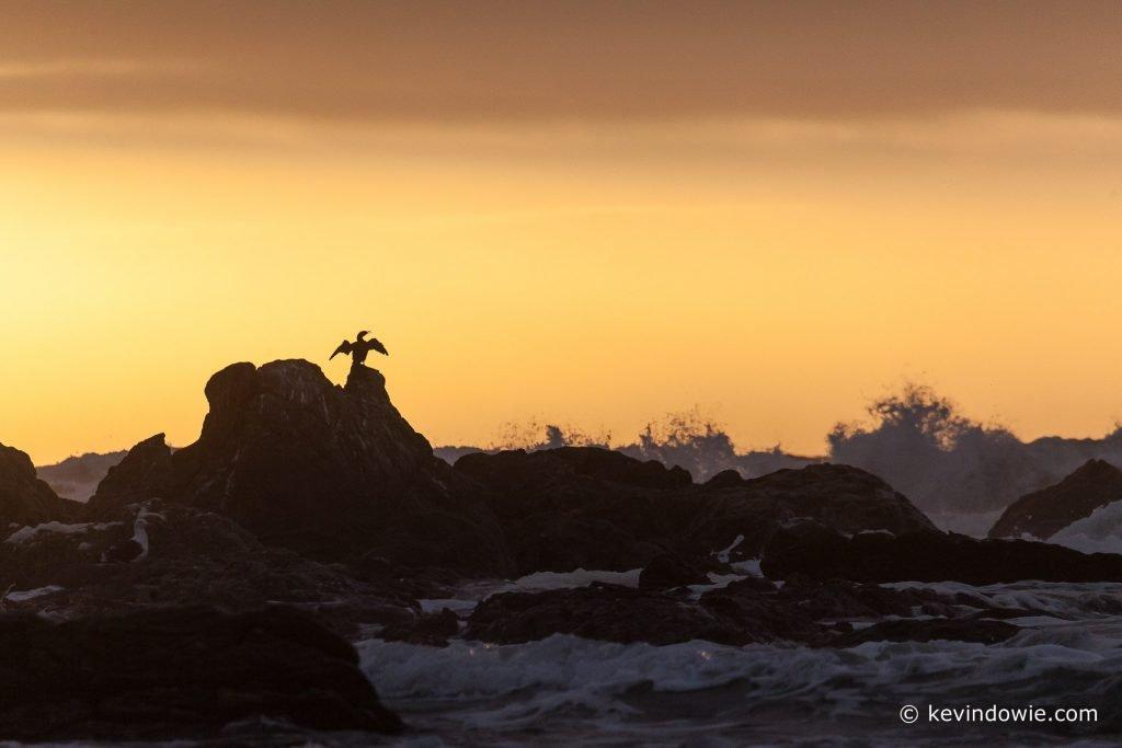 Cormorant against sunset
